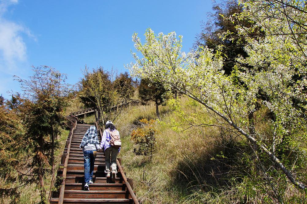 觀霧巨木步道-003