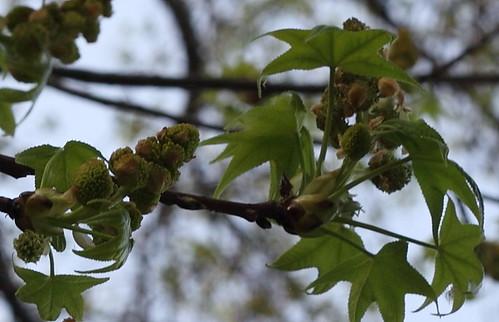 Pollen_2012_12