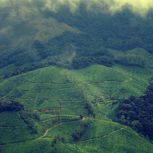 [免费图片素材] 自然景观, 场・农场, 景观 - 印度, 绿色 ID:201204191200