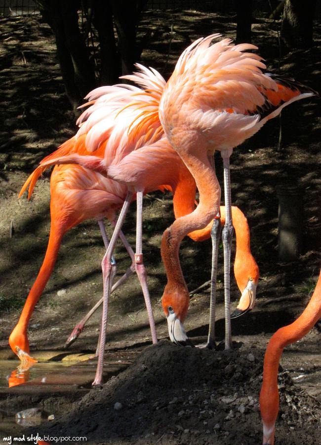 Columbus Zoo 2