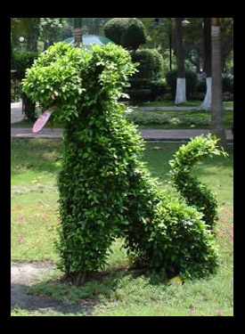 dog-topiary
