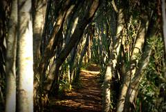 Sendero entre el bosque