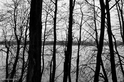 leica bw lake nature monochrome blackwhite natur ukraine x galicia x2 xseries ternopil природа україна озеро galizien tarnopol галичина чорнобіле тернопіль монохром leicaimages leicax2 ternopilskaoblast leicax2gallery