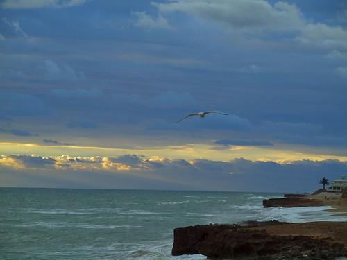 sun beach sunrise florida flight stuart flies segull hutchinsonisland