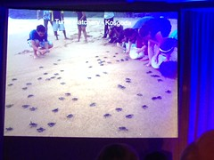 Turtle Hatchery in Sri Lanka #AK100Club