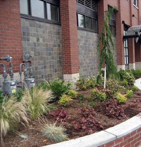 green infrastructure to manage stormwater (DC planning office)