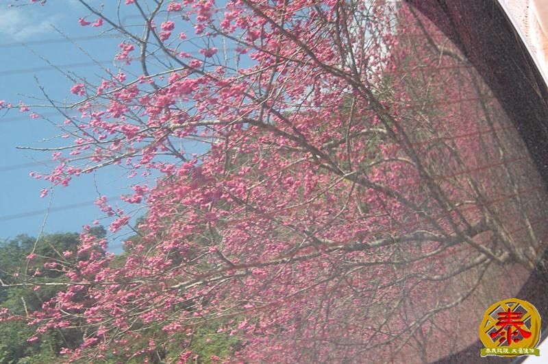 02.10-說好的櫻花呢!-6