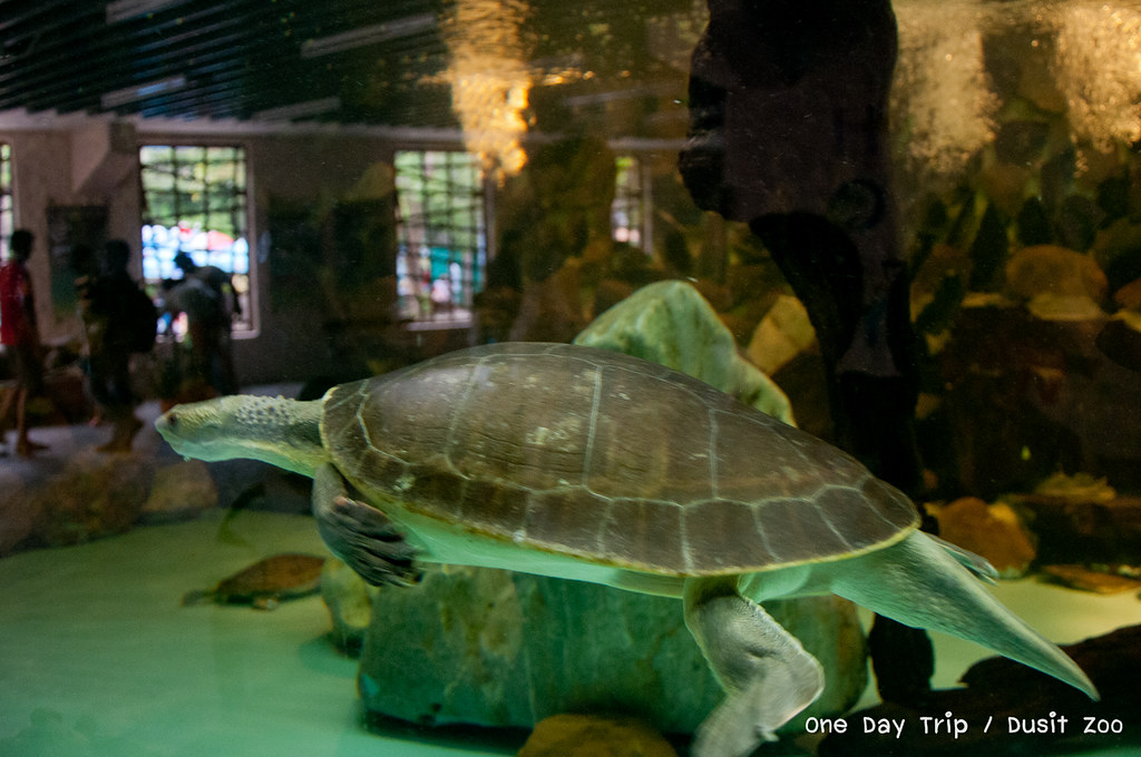 Dusit zoo - เต่า
