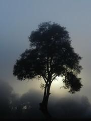 La Niebla!