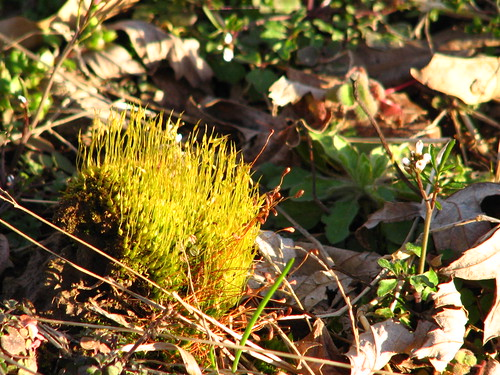 funny moss