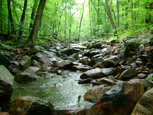 Creek in the Woods at Devil's Lake