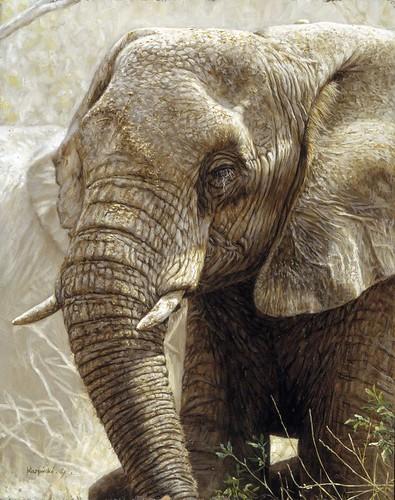 """'Elephant' oil on board 10"""" x 8"""
