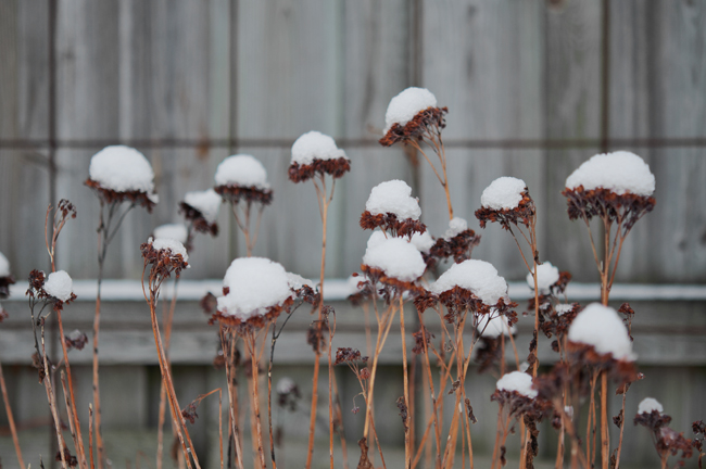 vintergarden 3