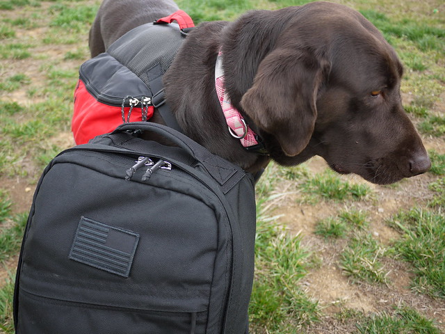 GORUCK - Coco looking less than impressed
