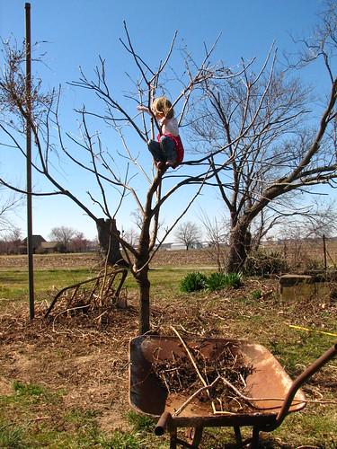 her favorite climbing tree