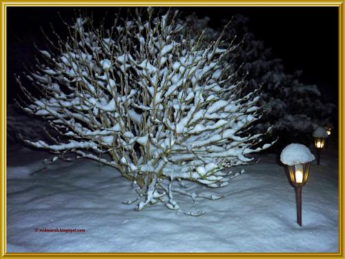 Snow P1030317