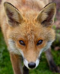 Animals & other wildlife