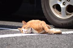 cats_2012-03-27_2