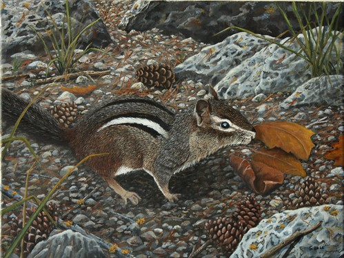 Harvest Time-Chipmunk by Sid's art