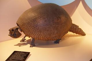 Pre-historic armadillo