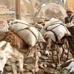 Iranian Man with Donkeys - Kandovan, Iran