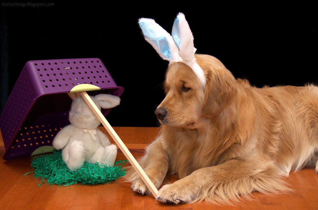 Easter Bunny Trap