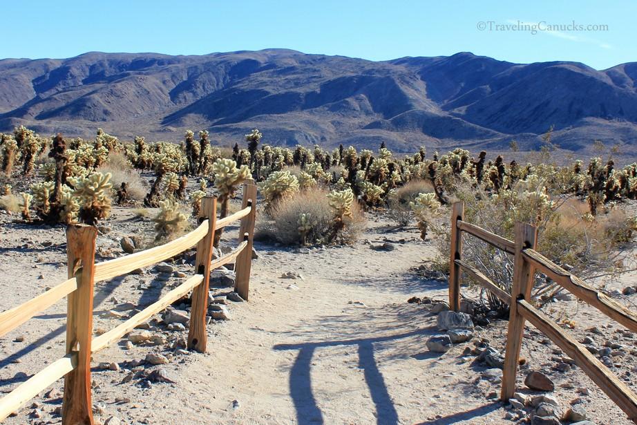 Extraordinary Landscapes Of Joshua Tree National Park California