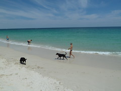 Ocean Reef dog beach