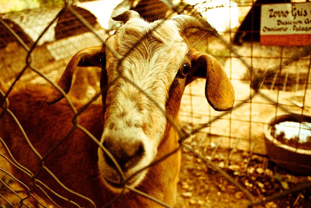 Animales silvestres (Fotos por MI)