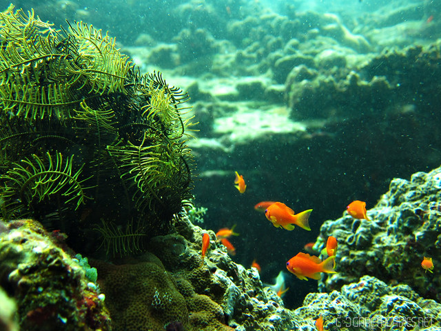 SCUBA Diving Pulau Weh