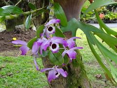 ナニマウガーデン・ハワイ島
