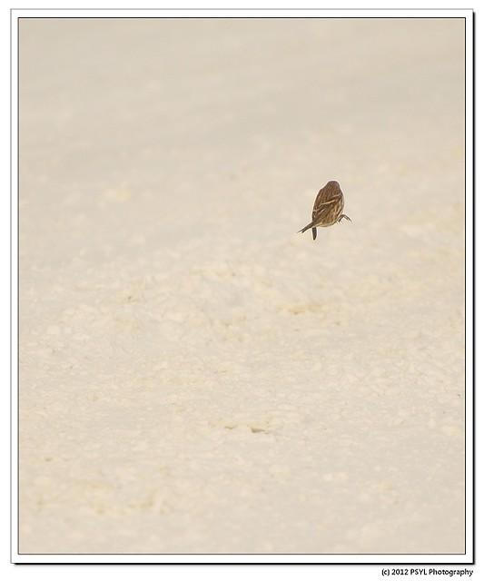 2012-02-25-1-P2259066
