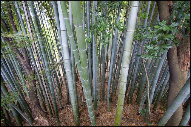 Bamboo forest on the hill