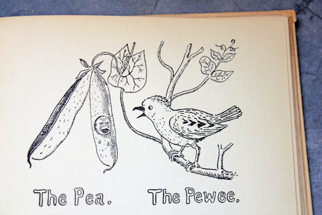 The Pea and the Pewee