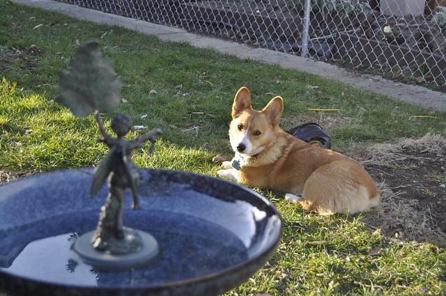 Garden update, March 8, 2012 022