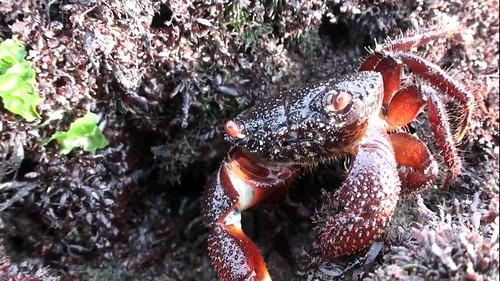 桃園縣觀音鄉藻礁蘊含豐富生機,需要即刻停止破壞性的污染廢水排入!圖片提供:農委會特生中心副研究員劉靜榆提供)