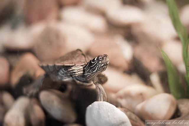 Tortoise!!