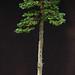 Hinoki tall pot 3-22-12 by OpenEye