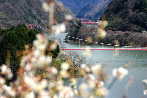 (5)梅と吊り橋