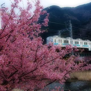 桜駅~、桜駅~。お出口左側です。