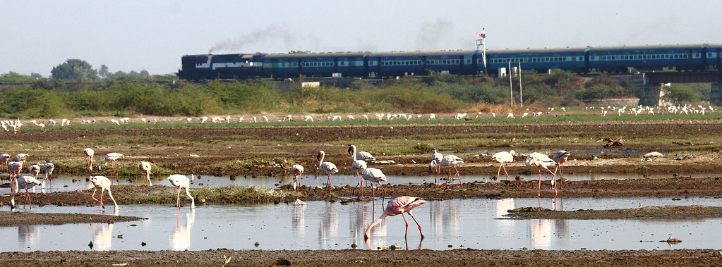 Train_and_flamingos