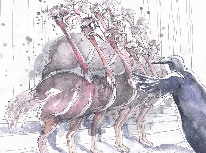 Ostrich Choir