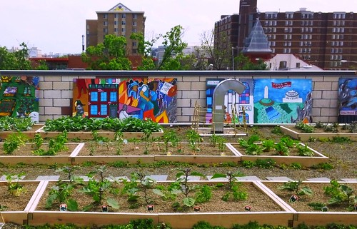 rooftop garden, Bread for the City, Washington, DC (c2012 FK Benfield)