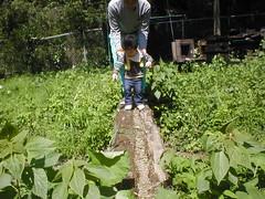 丸太の橋を渡る(2012/5/5)