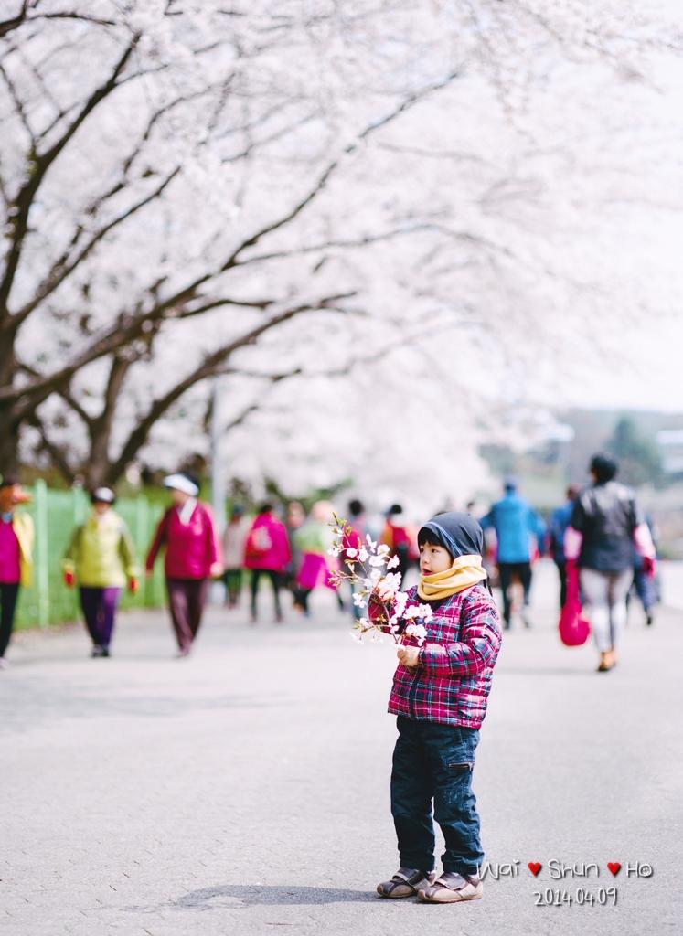 Sakura Boy