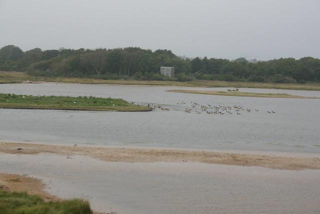 Pennington Marshes