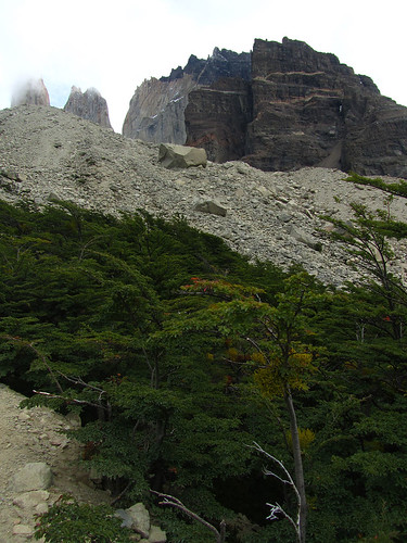 Forest canopy near Torres del Paine