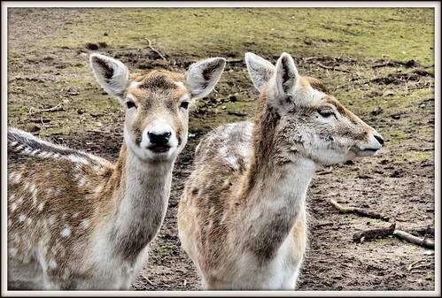 Deer park 2, Bakkum by Meino NL