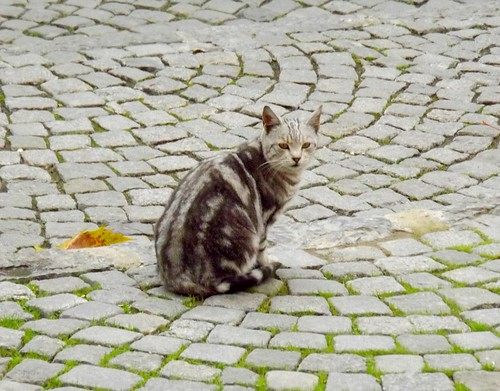 Cat on the Bricks