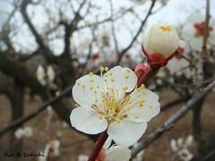 suigetsu2012 (5)